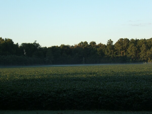 Picture of farm and forest